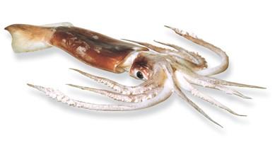 seafoodNZ_images_sfp_arrow_squid.jpg