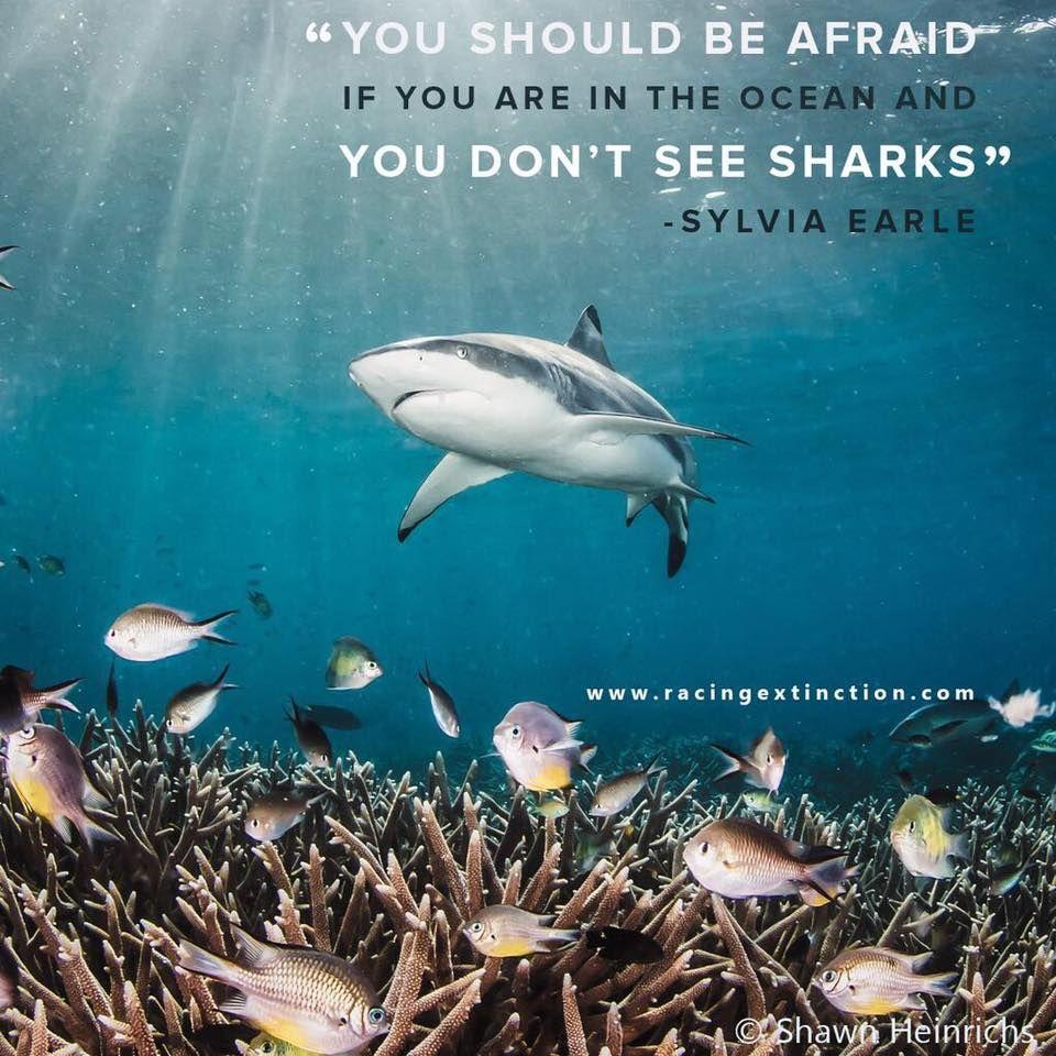 sharks3.jpg